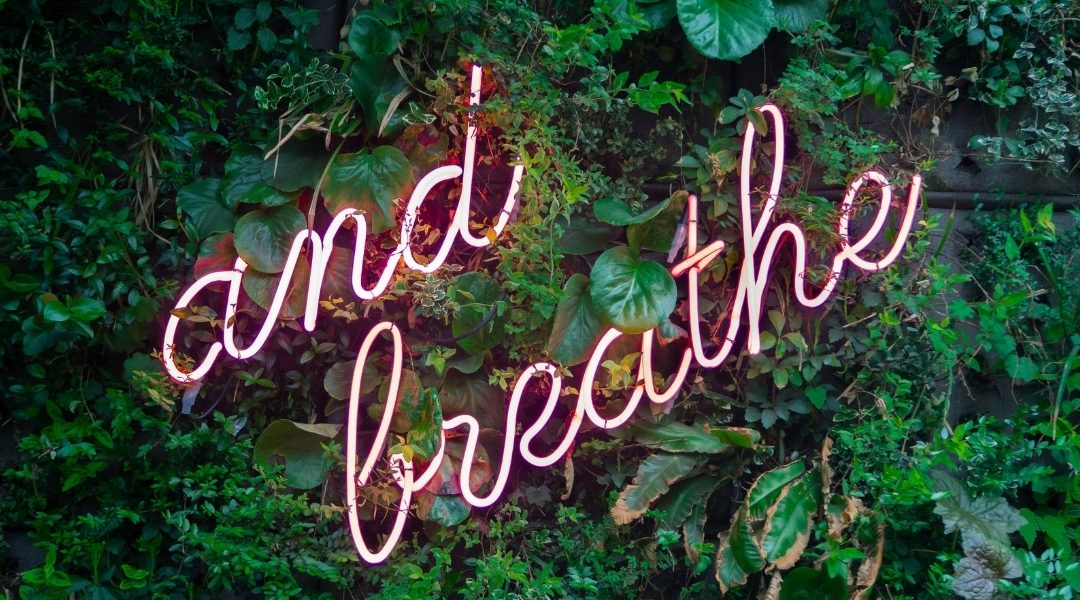 Your Vagus Nerve and How Breath Work Helps Wellbeing